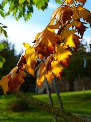 La magie de l'automne..