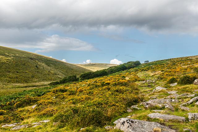 Dartmoor - Wistman's Wood -  20140811
