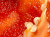1-10 Project: 6 Bell Pepper Seeds