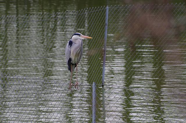 Parc aux oiseaux - Villars les Dombes - France