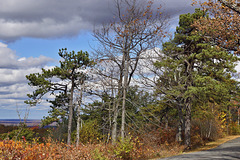 A Wuthering Height – High Point State Park, Sussex County, New Jersey