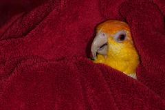 Soft: Fluffy Pumpkin in a Fluffy Blanket