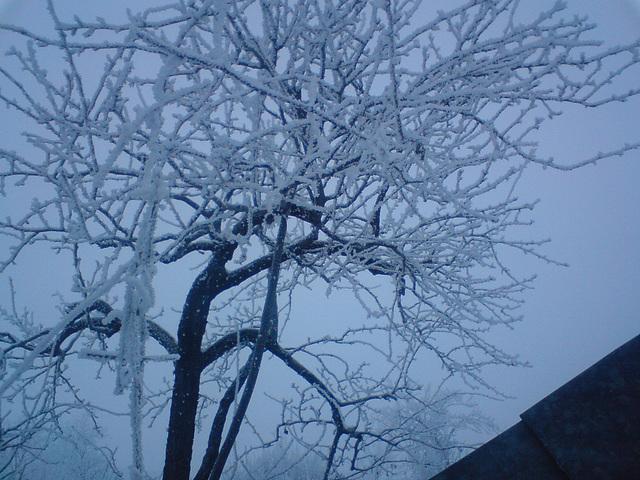 Tree. Sky. Winter.