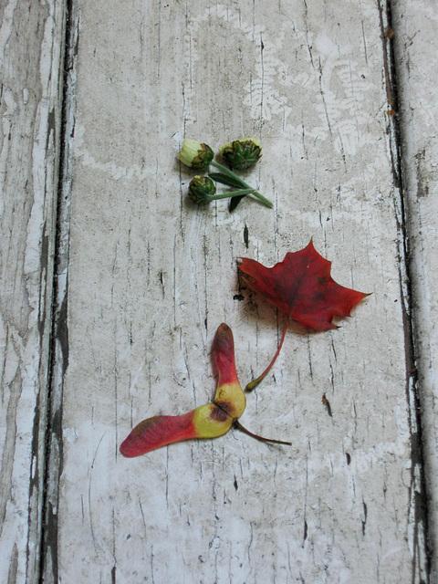 Autumn en miniature