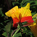 Flower at Parley Johnson House (0298)