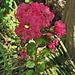 Flower at Parley Johnson House (0300)