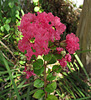 Pink Flower (0299)