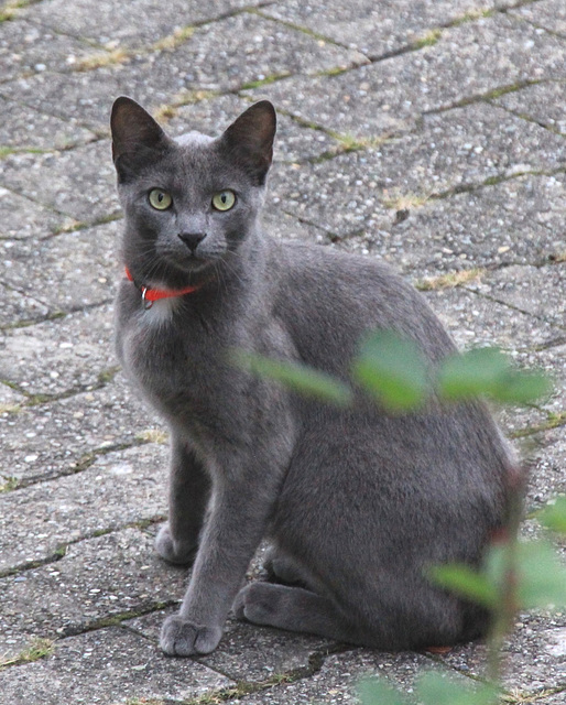 Katzenbesuch im Hof