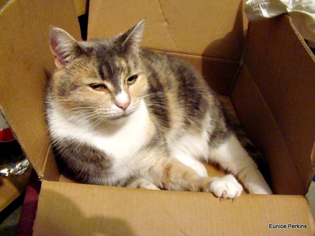 Honey In Cardboard Box