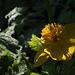DSCF0940_Yellow_sm