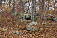 The Forest Floor – High Point State Park, Sussex County, New Jersey