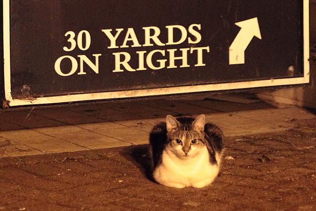 Night on the tiles for Salisbury kitty