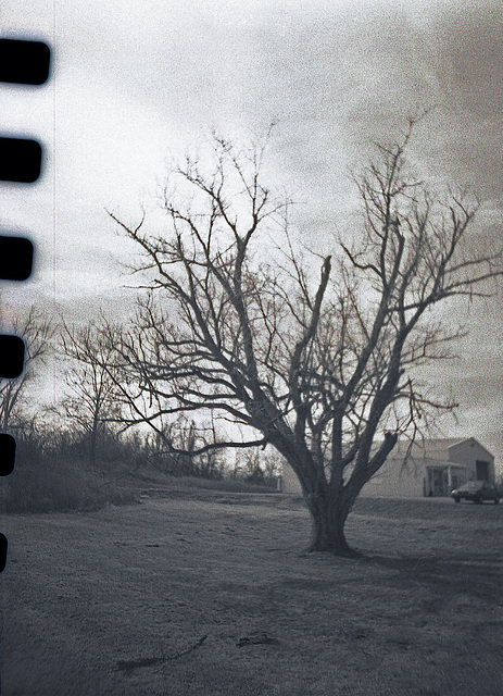 Pentax Sprocket Tree