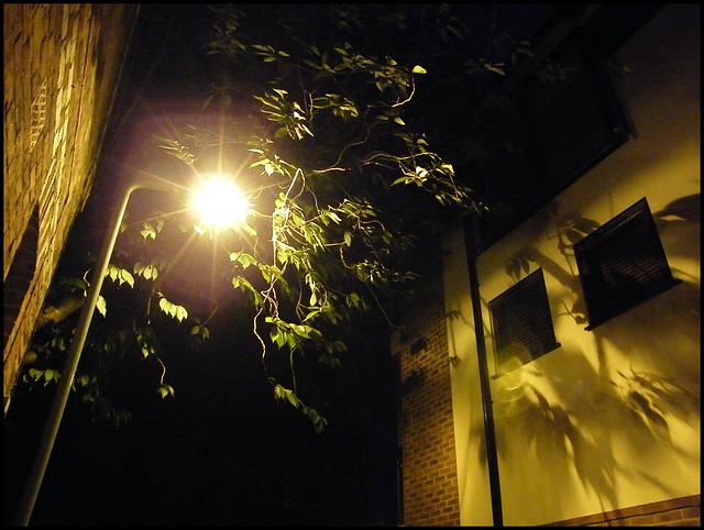 Jericho lamplight