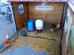Bayeux 2014 – Chickens
