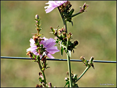 Weed Against Fence Wire