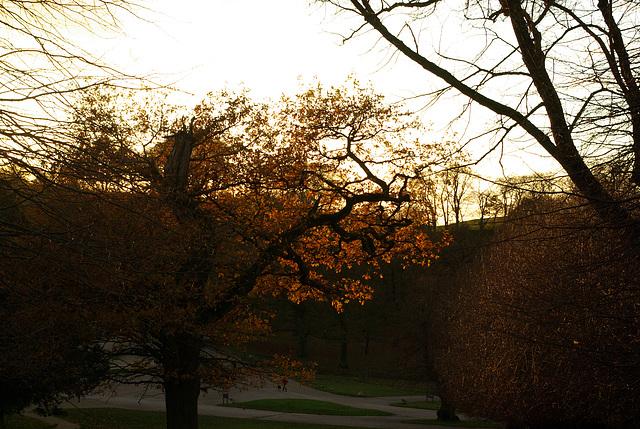 Lyme Park