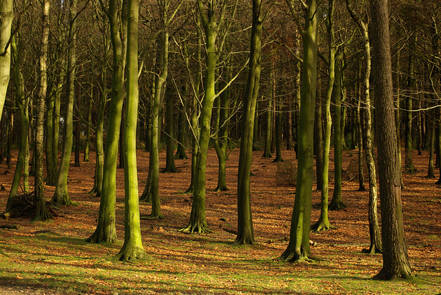 Lyme Park trees