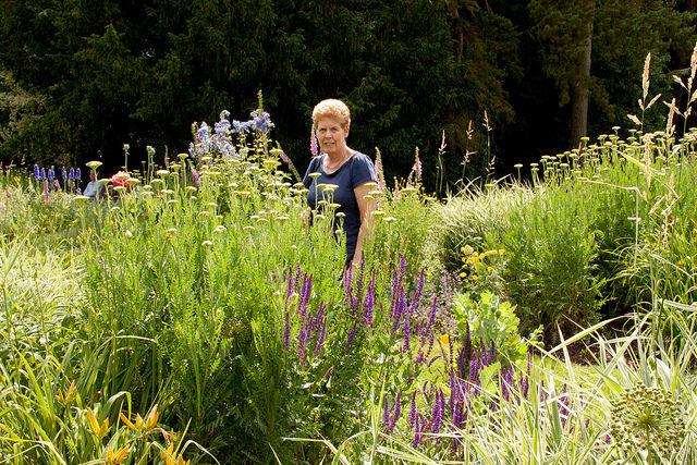 Ginger in Mr Shaw's Garden,