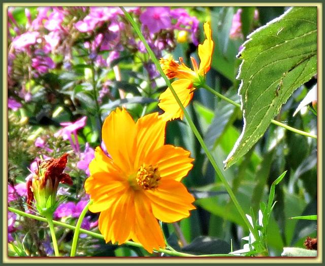 - flowers of Summer