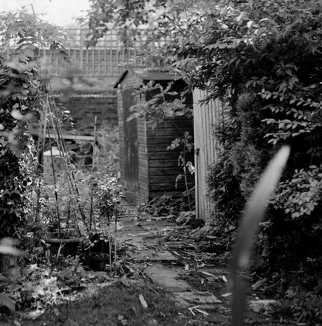 Garden SW9 (crop).