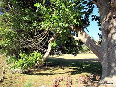Trees in Wharepapa South School Grounds