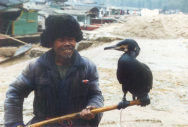 Grand Cormoran et son maître