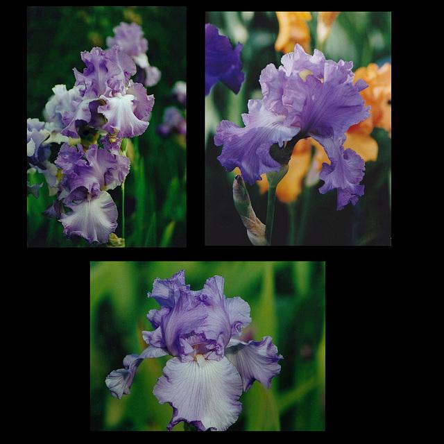 Iris Orchidarium