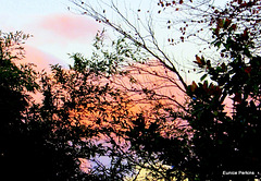 Sunset Behind Trees