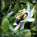...tout barbouillé de pollen ,pour vous souhaiter un agréable week-end...
