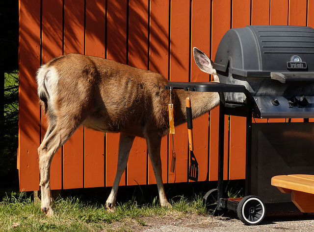 Cleaning the BBQ
