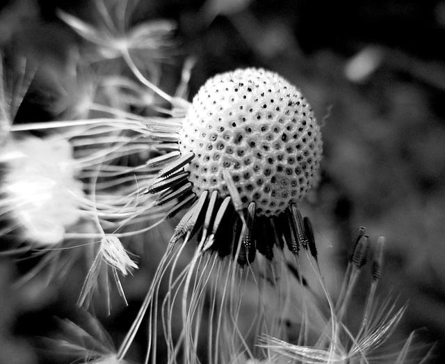 Flying seeds!