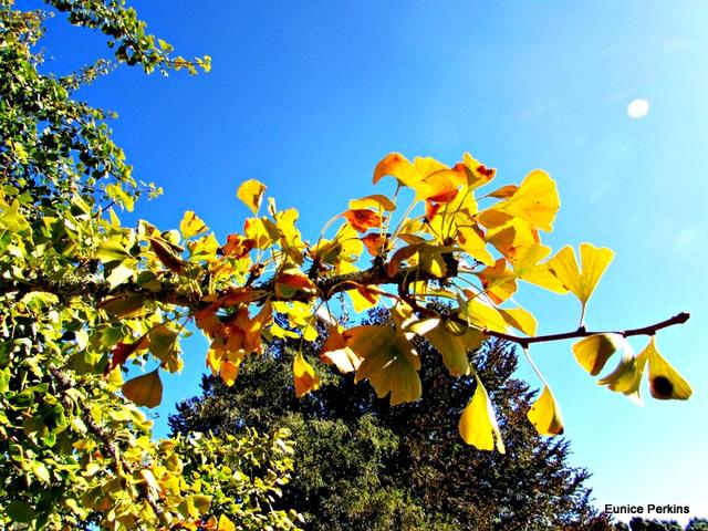 Leaves Enjoying Sunlight