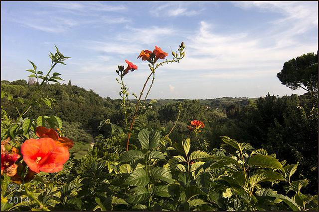 Flowers in Vinci village