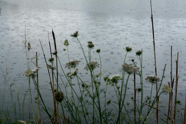 Champêtre : Jour de pluie