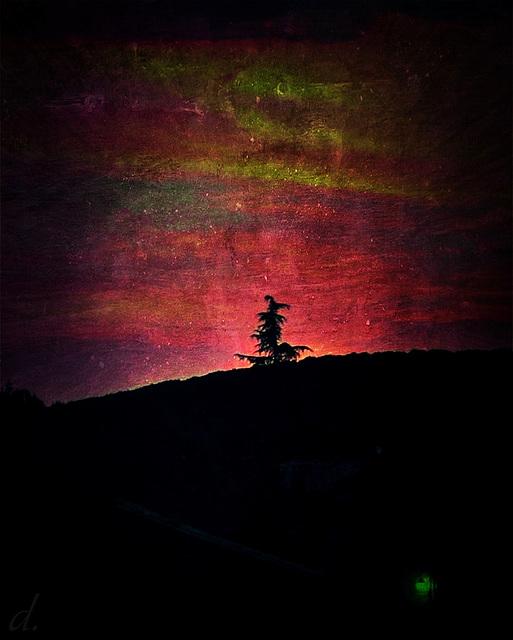 aurora imaginalis