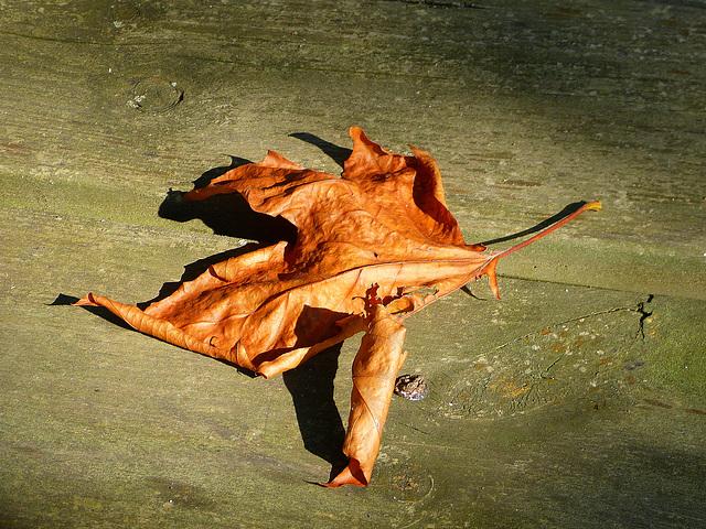 Patte d'automne (Touche Z)