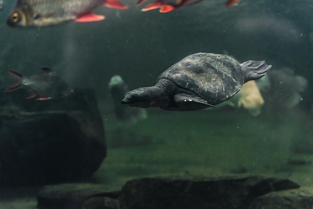 Schildkröte - 20140906