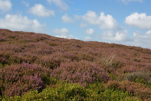 Bray Clough Heather + A380