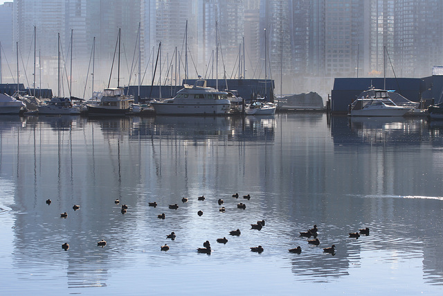 Waterfront and Waterfowl