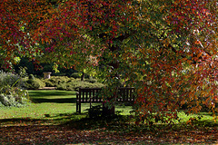 S'asseoir et admirer les couleurs de l'automne