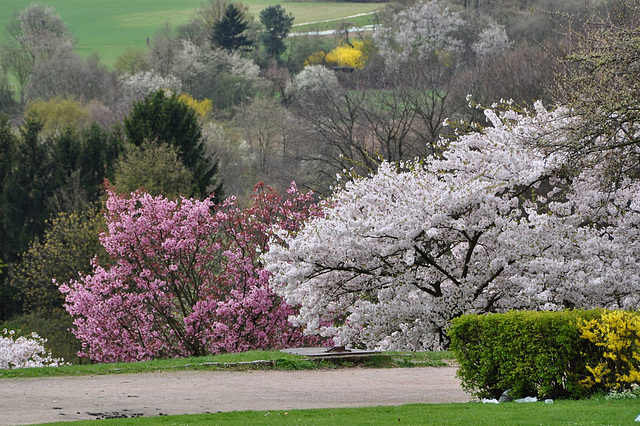 Der Lohrberg im Frühling
