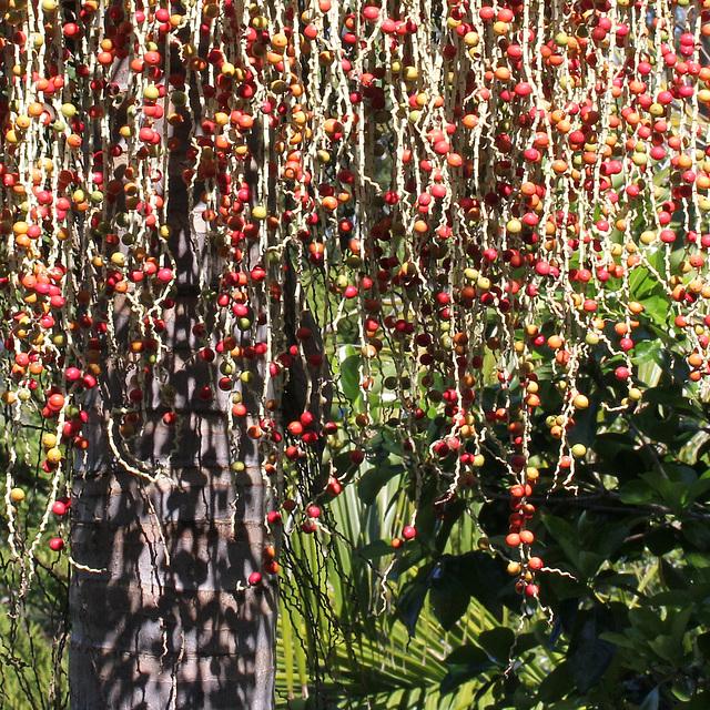 So many berries