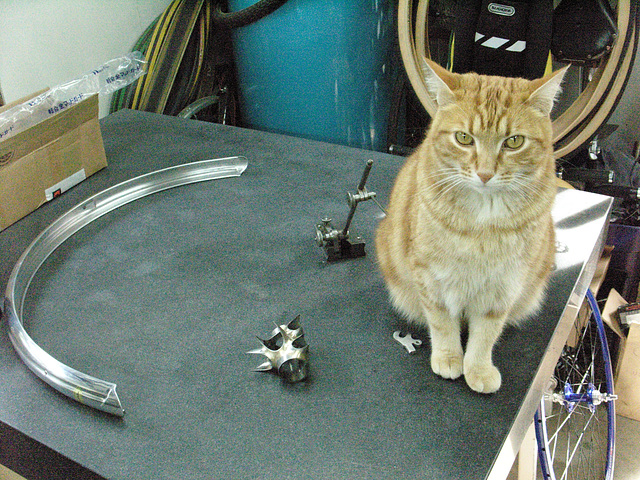 Bailey with the bits of #CT209 on the stone alignment table (2009)