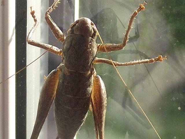 A grasshopper met me when I got home