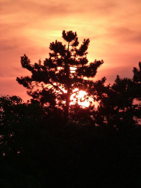 Aura der Sonne