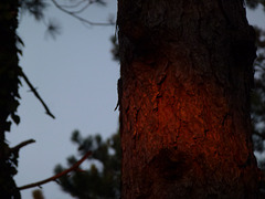 20140814 Fee Forêt Parlatges (15) al
