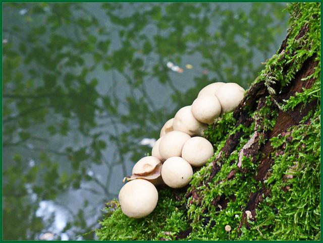 Stillleben am Teich