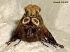 2449 Abrostola triplasia (Dark Spectacle)