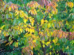 Leaf Colour.
